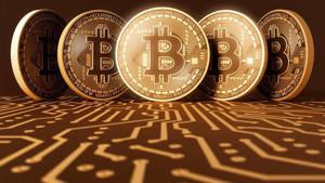 Ảnh của Số lượng cá mập Bitcoin Cash giảm sau cú chốt lời 39% hồi cuối tháng 7