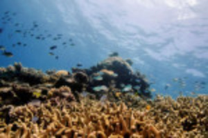 Picture of UNESCO keeps Great Barrier Reef off